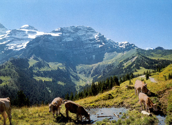 Image Result For Tour Of The Alps